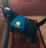 pet-therapy-midnight-vest